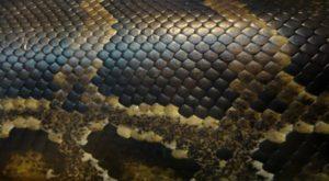 Serpent (Slam)
